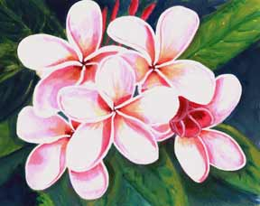 Plumeria  flower, hawaii tropical flowes  art prints, painting by hawaii artist Donald K. Hall #124