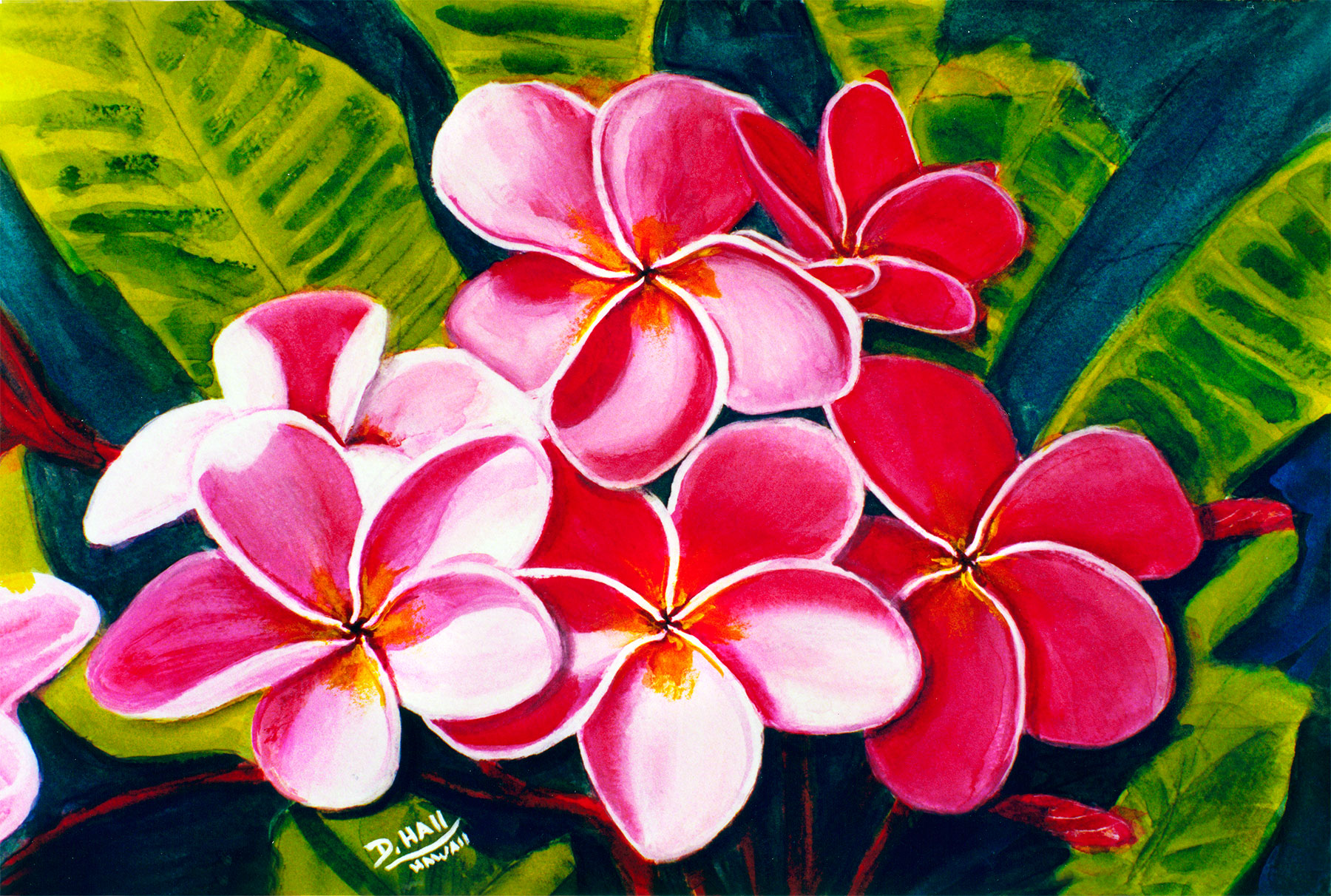 Hawaii plumeria flowers art paintings for sale hawaiian plumeria plumeria flower hawaii tropical flowes art prints painting by hawaii artist donald k izmirmasajfo Choice Image