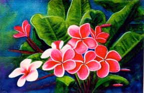 Plumeria  flower, hawaii tropical flowes  art prints, painting by hawaii artist Donald K. Hall #159