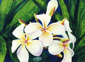 Plumeria  flower, hawaii tropical flowes  art prints, painting by hawaii artist Donald K. Hall #160