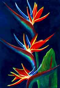Bird of Paradise flower, hawaii tropical flowes  art prints, painting by hawaii artist Donald K. Hall #161