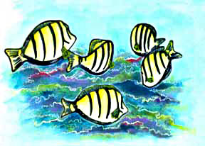 Hawaii art prints, Marine Life Hawaiian art (Convict Tang Fish painting by Hawaii artist Donald K. Hall #209