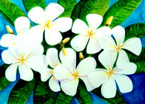 Plumeria  flower, hawaii tropical flowes  art prints, painting by hawaii artist Donald K. Hall #220