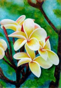 Plumeria  flower, hawaii tropical flowes  art prints, painting by hawaii artist Donald K. Hall #225