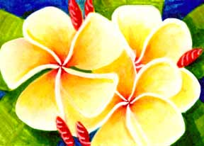 Plumeria  flower, hawaii tropical flowes  art prints, painting by hawaii artist Donald K. Hall #226