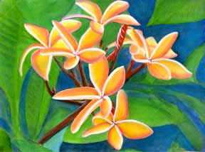 Plumeria  flower, Hawaii tropical flowes  art prints, painting by Hawaii artist Donald K. Hall #232