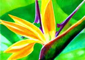 Bird of Paradise flower, hawaii tropical flowes  art prints, painting by hawaii artist Donald K. Hall #262