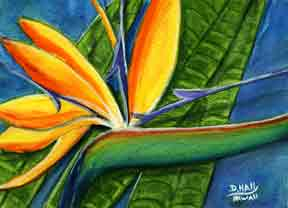 Bird of Paradise flower, hawaii tropical flowes  art prints, painting by hawaii artist Donald K. Hall #300