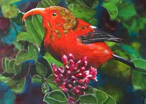 Hawaii Birds - Hawaiian Birds Art, prints - Original Bird paintings by Hawaii Birds artist Donald K. Hall.
