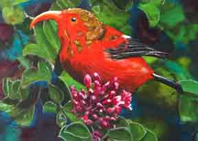 Hawaii Art, prints,  Ooriginal paintings by Hawaii Birds artist Donald K. Hall.