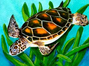 Hawaii Art, Honu (Sea Turtle) by Hawaii artist Donald K. Hall #352