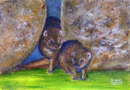 "Hawaiian Original  art and prints, Hawaii Animal, "" Mongoose,"" painting by Hawaii artist Donald K. Hall #511"