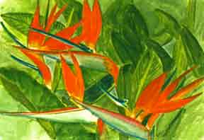 Bird of Paradise flower, hawaii tropical flowes  art prints, painting by hawaii artist Donald K. Hall #55