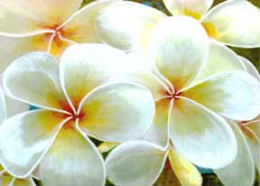Hawaii Art, Print, Hawaiian Flowers by Hawaii Flower artist Donald K. Hall.